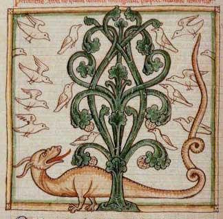 peridexion com dragão