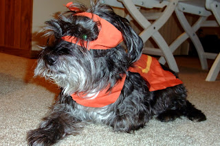 dog super hero costume DIY