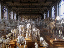 Musee National d'Histoire Naturelle