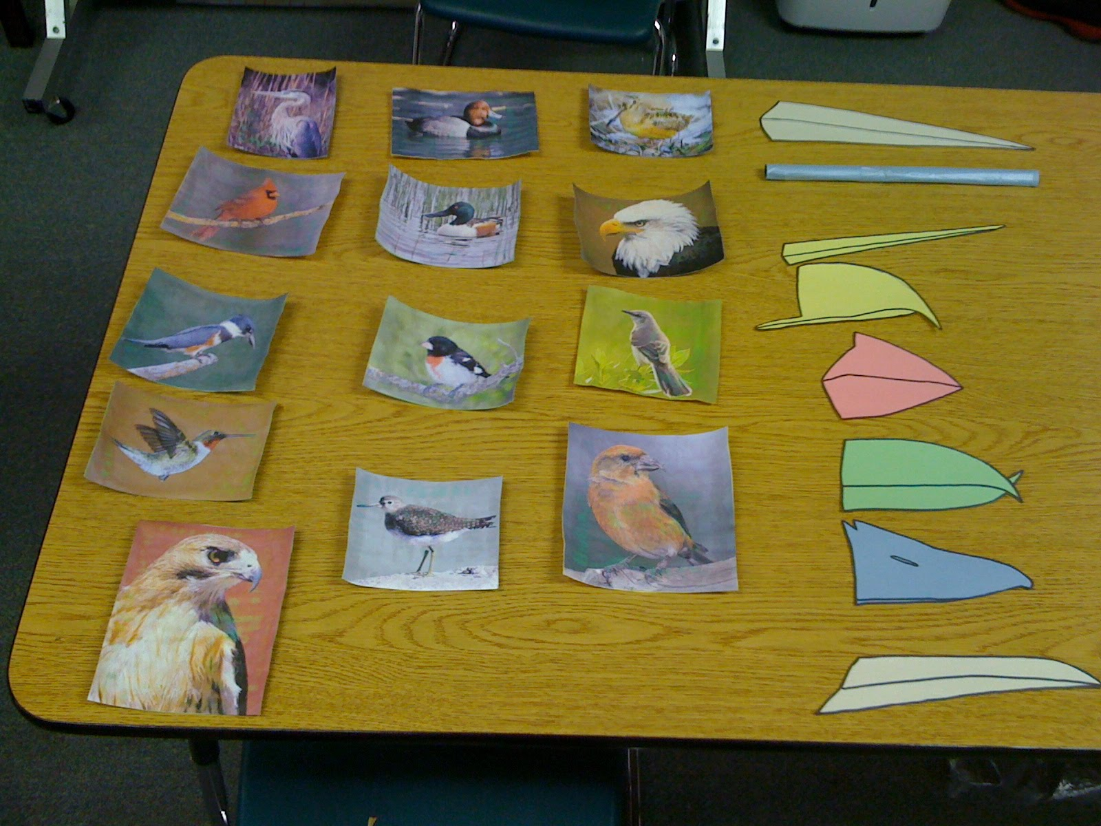 Depaul School Bird Presentation Landfill Bird Blog
