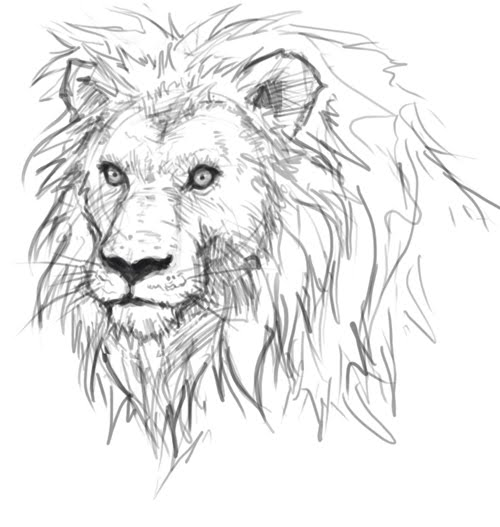 Drawing of a lion