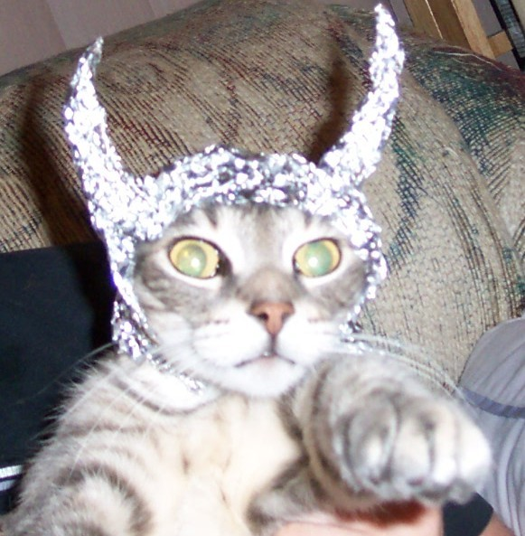 One of my cats chewed through some aluminum foil to get to banana bread. It isn't clear if any was ingested. One has been throwing up bile and didn't take treats this am.