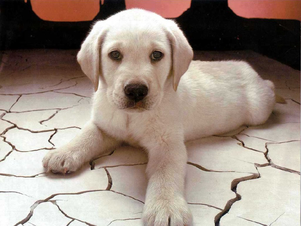 Dogs Food Stuff: Cute Puppy Wallpapers