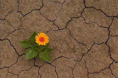 http://3.bp.blogspot.com/_YSFWzKP2ZOM/R18GCOWNq2I/AAAAAAAAAI8/LP3iR9P5nZw/s400/flower2.jpg