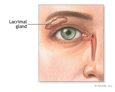 English idioms,sayings and expressions Lacrimal gland 20188