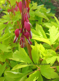 Westie, Art & Garden: Pink and Lime Green Plant Combinations