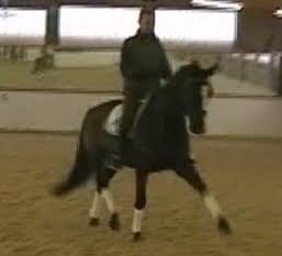 pferd symptome chip sprunggelenk