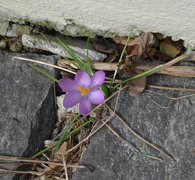 Bin Im Garten Bilder Von Gestern