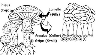 Home Biology: Growing Fungi