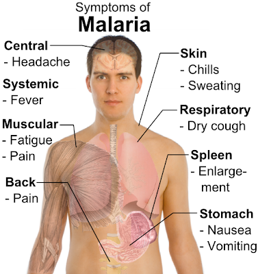 duffy blood group and its relationship to malaria pills