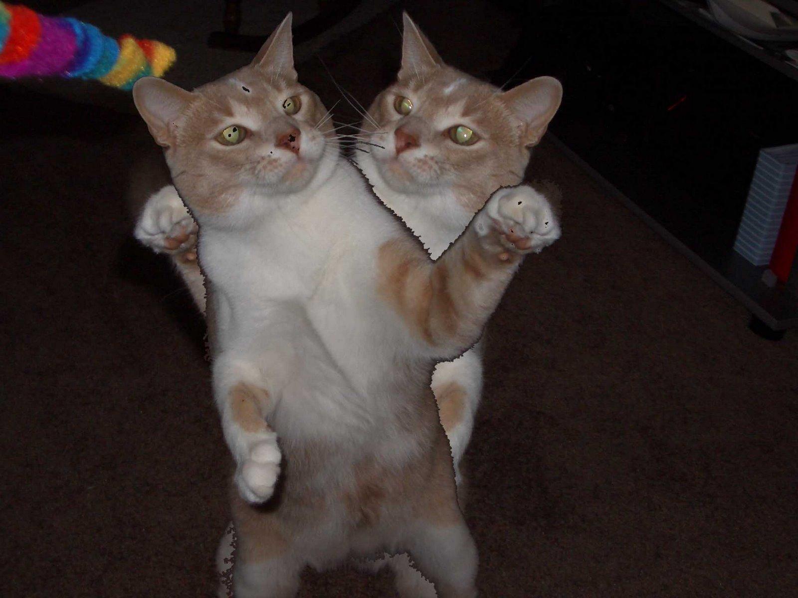 Cat Getting Beaten Up
