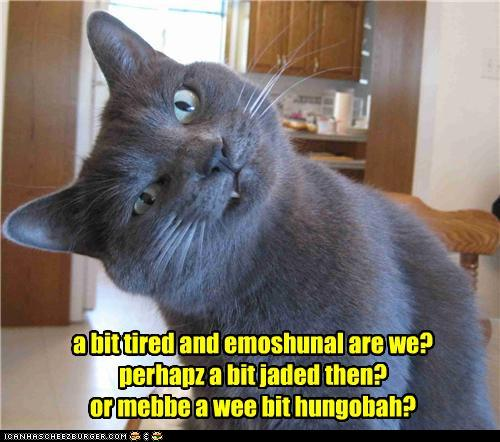 Meta Watershed Lolcats New Year S Day Round Up 1 January 2011
