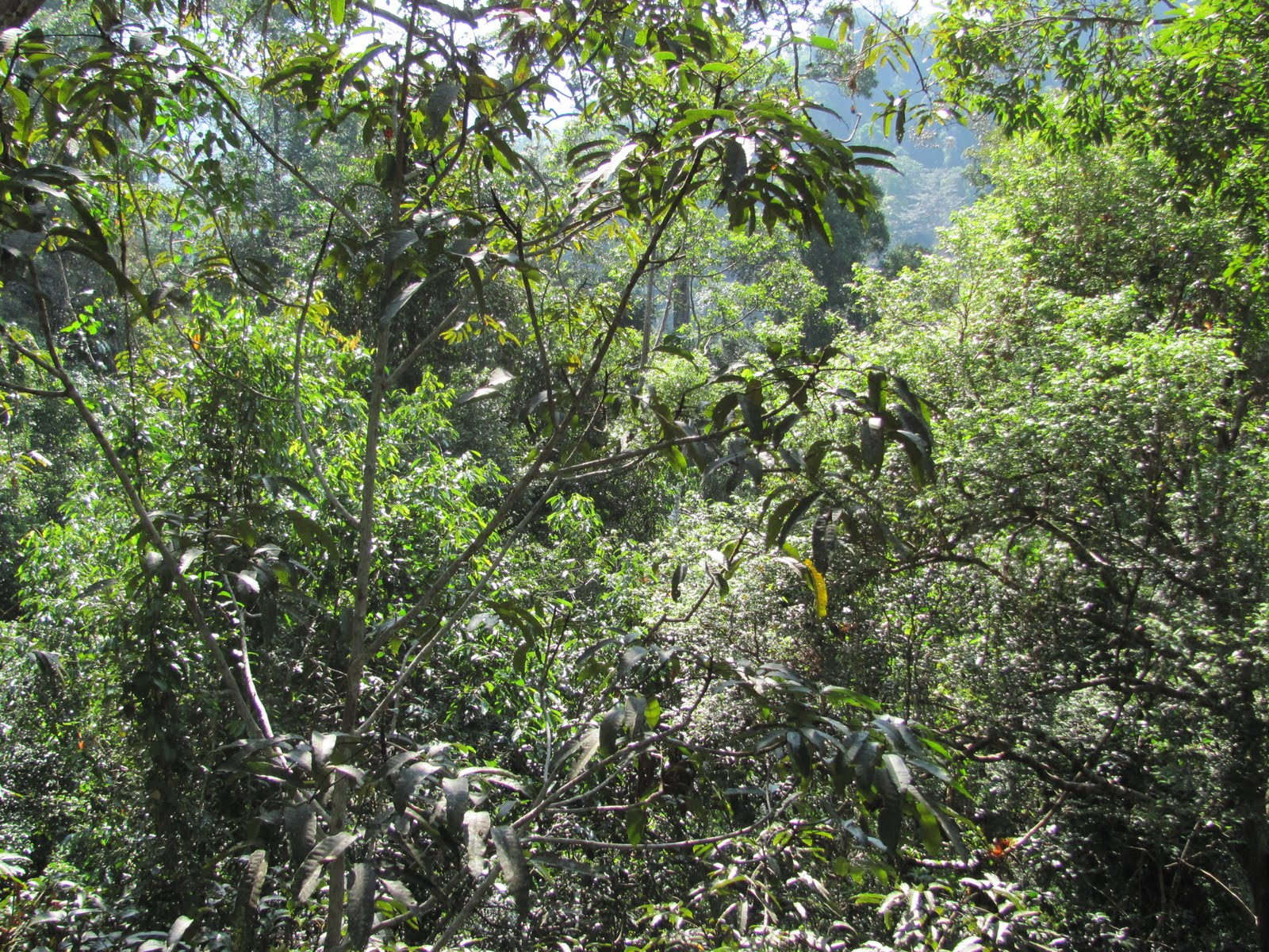 Tropical Rainforest Diagram 93 22re Wiring Mark Mcginley 39s Fulbright In Malaysia Rainforests