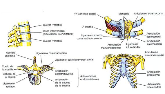 Enfermeriauq Huesos Y Articulaciones Del Torax Por Daniel