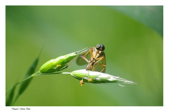 Insecto para conversar