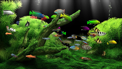 Crack dream aquarium screensaver forestapplications - Dream aquarium virtual fishtank 1 ...