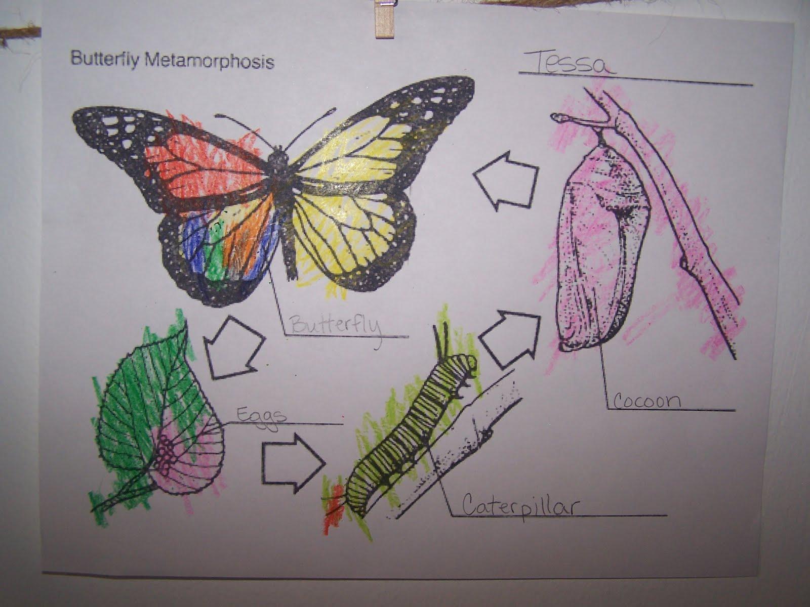 Adventures In Home Pre Schooling Day 3 On Butterflies