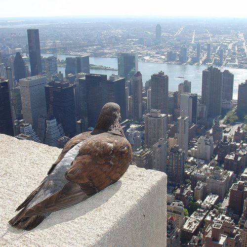 Zero One. Empire State Pigeon