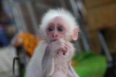 Cute Funny Wallpaper Images Amazing Amp Stunning Picture Gallery Chinese Baby Monkey