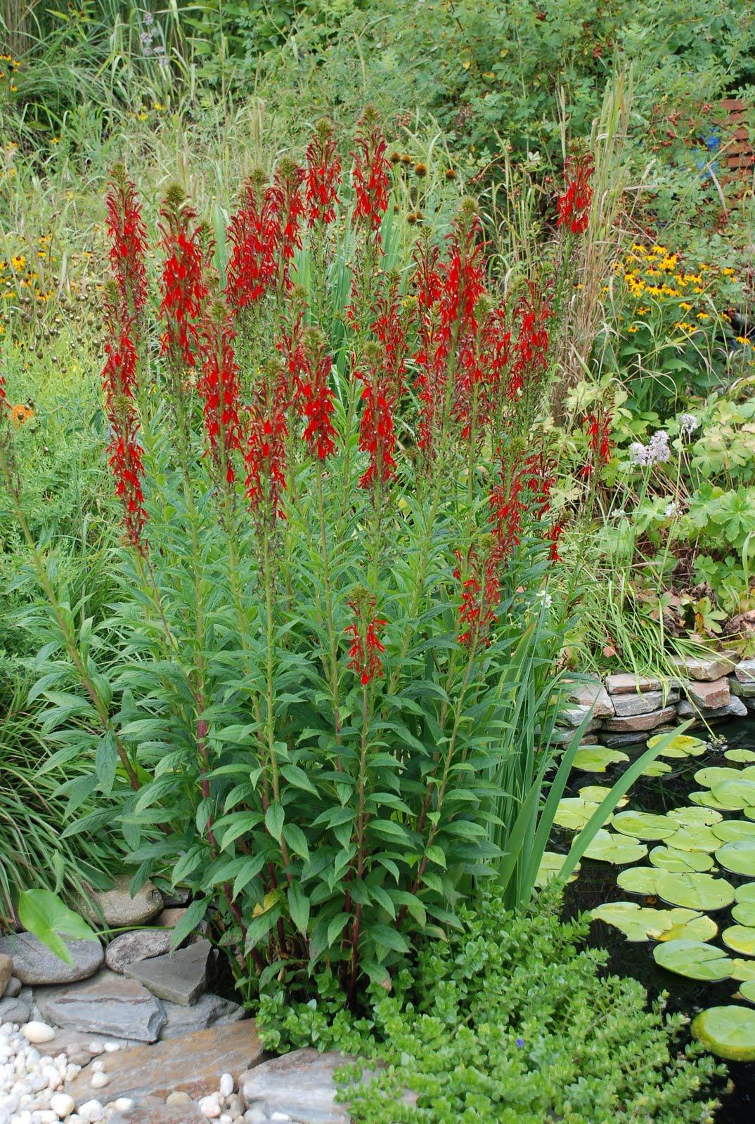 Garden Pond Plant Fertilizer