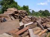 ラオスメコン川を利用して運ばれた流域近くの花梨製材