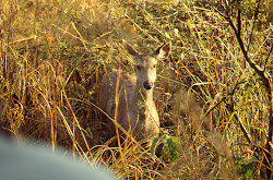 Jim Corbett National Park-Fauna