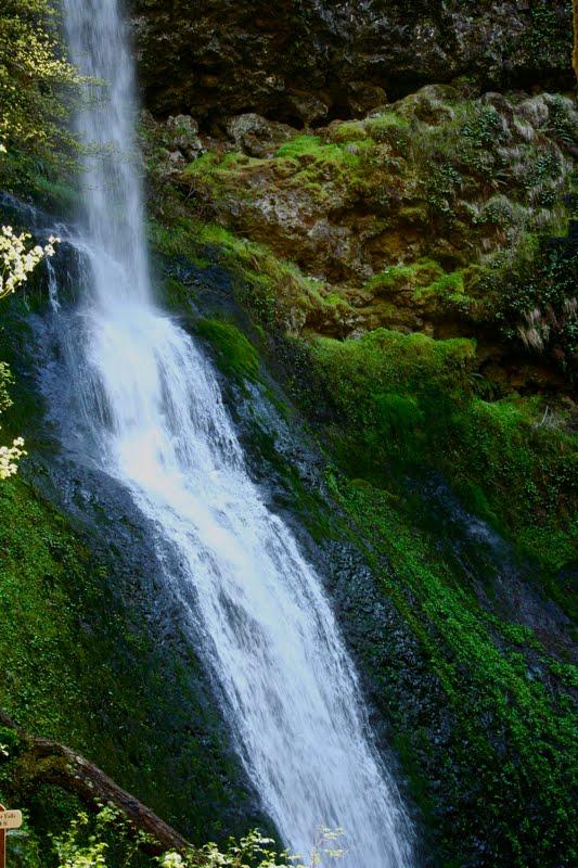 Northeast Road Trip >> Colorado Lifestyle: Oregon: Silver Falls State Park