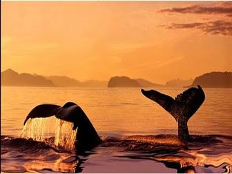 Baleines - chez Polo.jpg