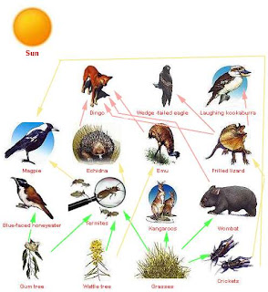 identify the 5 symbiotic relationship in an ecosystem