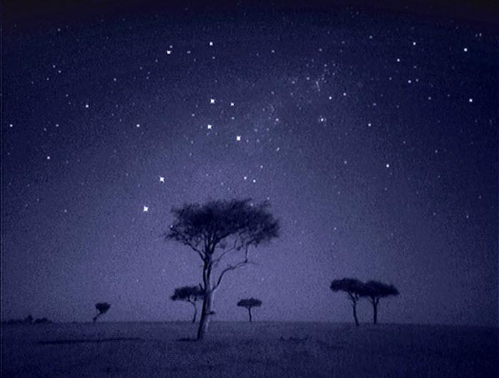 Funtrublog Animal Life On The African Plains At Night