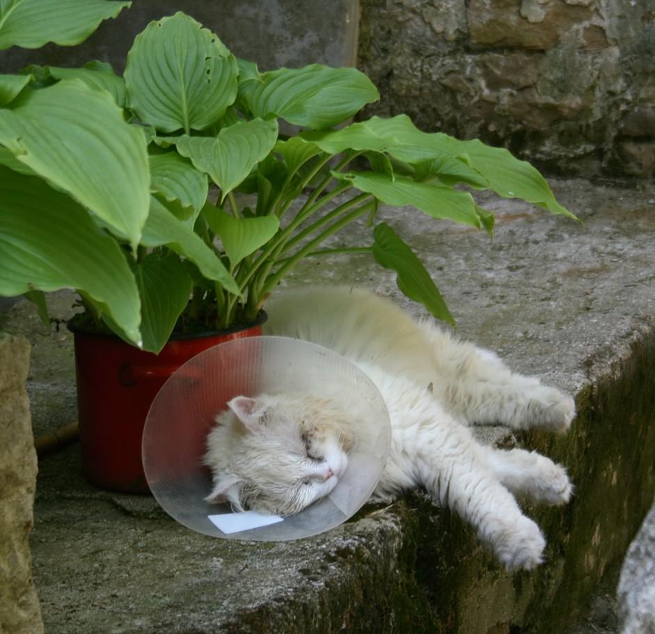 schlaflos spruch