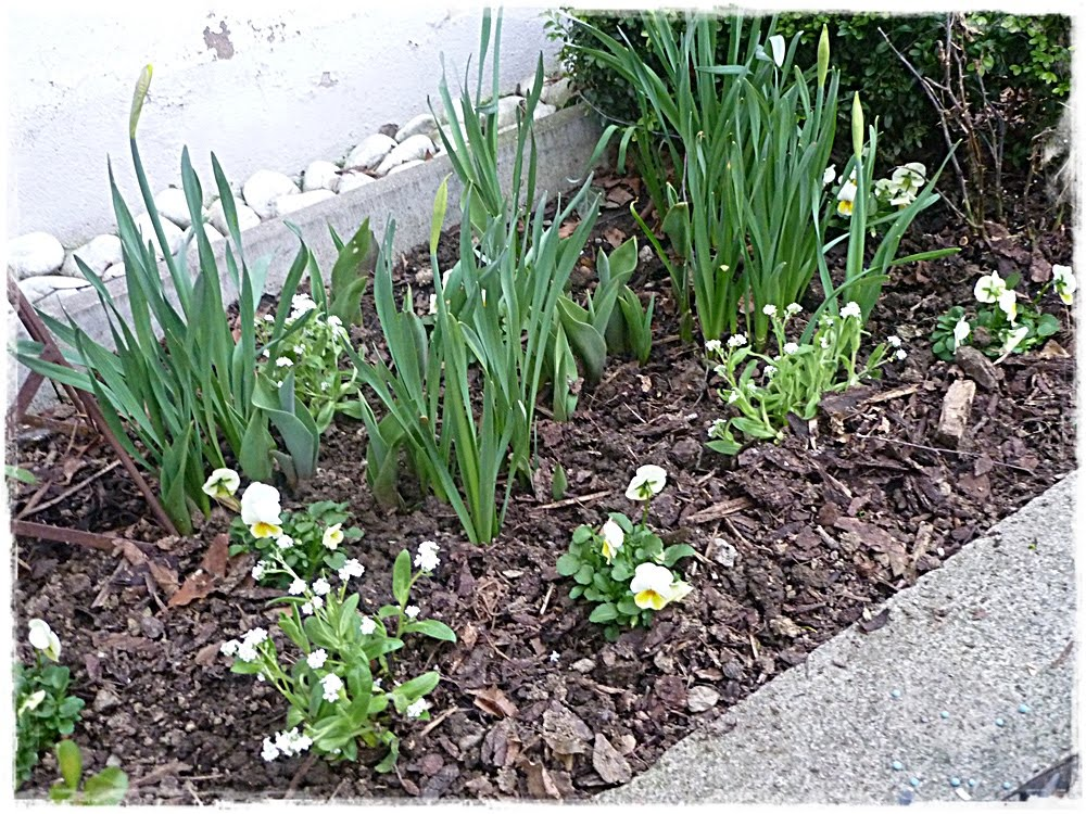 Livingdreams Gartenblog