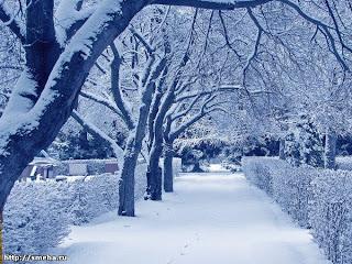 Зима в городском парке.