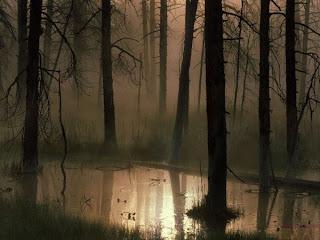 Туман в заболоченном лесу.