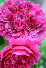 William Shakespeare 2000 Austinros