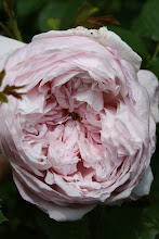 Spirit of Freedom austinros