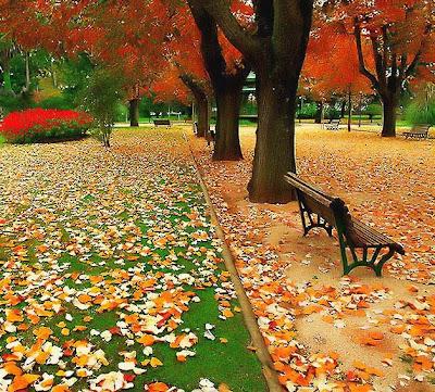 Outono (o coração por estações)