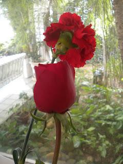 Resultado de imagem para o cravo e a rosa