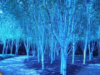 Some blue trees