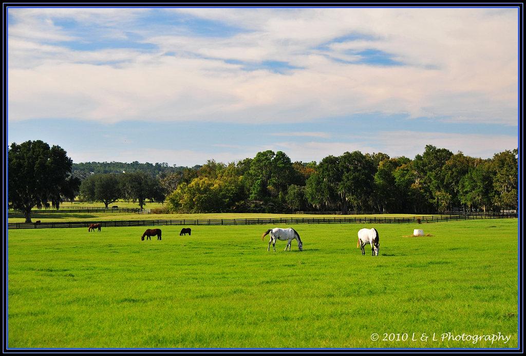 Ocala Central Florida Amp Beyond Horse Farms
