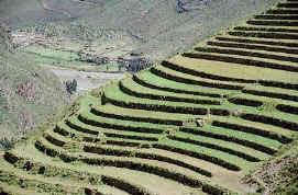 Los Incas Organización Económica