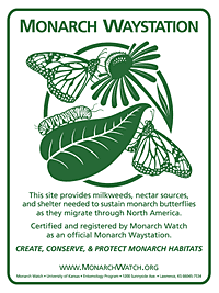 My yard is a Certified Monarch Waystation