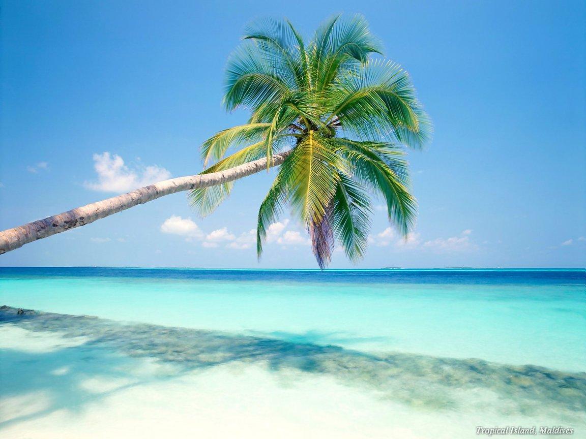Carribean Beauty: Beach Wallpaper Backgrounds