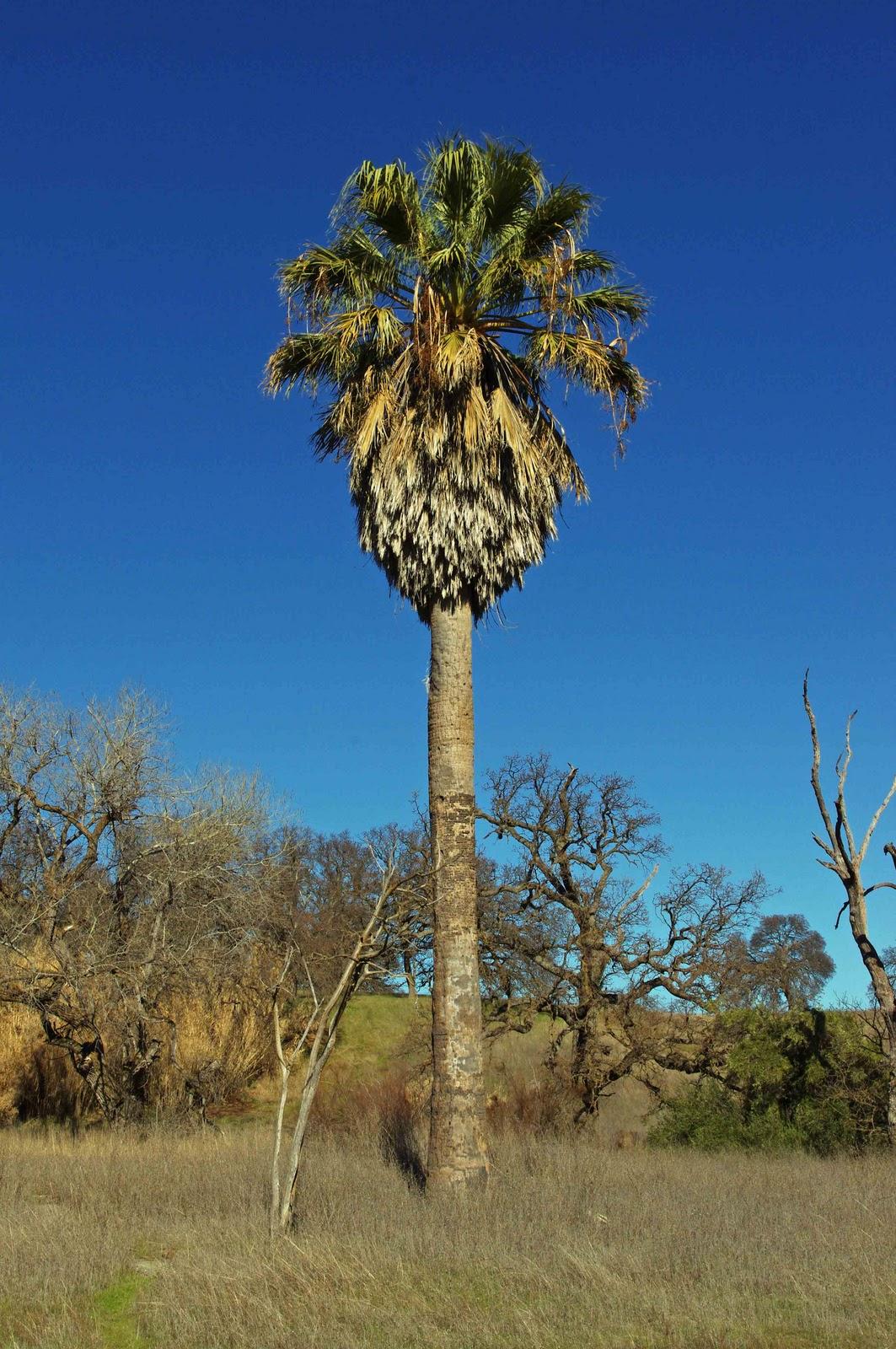 Usbackroads Trails Of Black Butte Lake Orland California