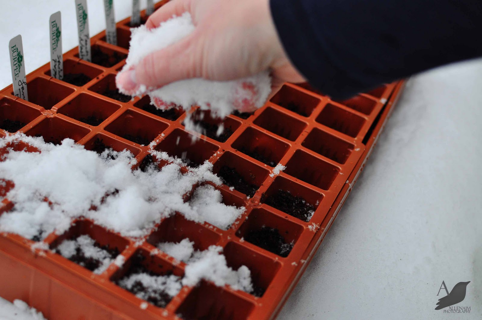 A Nest for All Seasons Blog How to Winter Sow Seeds in the Snow