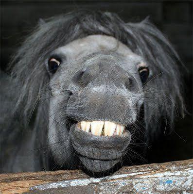 Animais também sorriem?