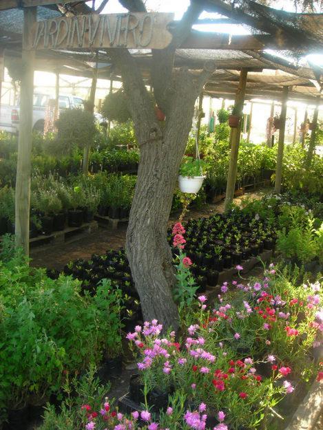 Plantas ornamentales y medicinales for Como establecer un vivero