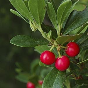 plantas ornamentales y medicinales