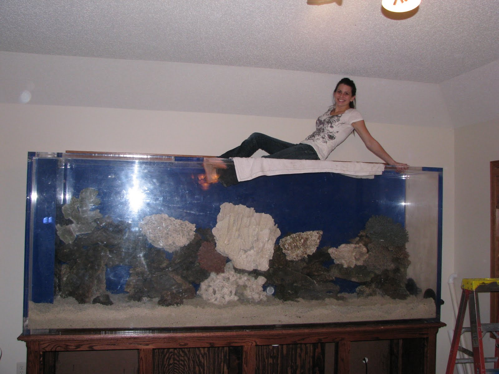 100 gallon fish tank 600 fish tank aquarium 560 gallons for 10 gallon fish tank for sale