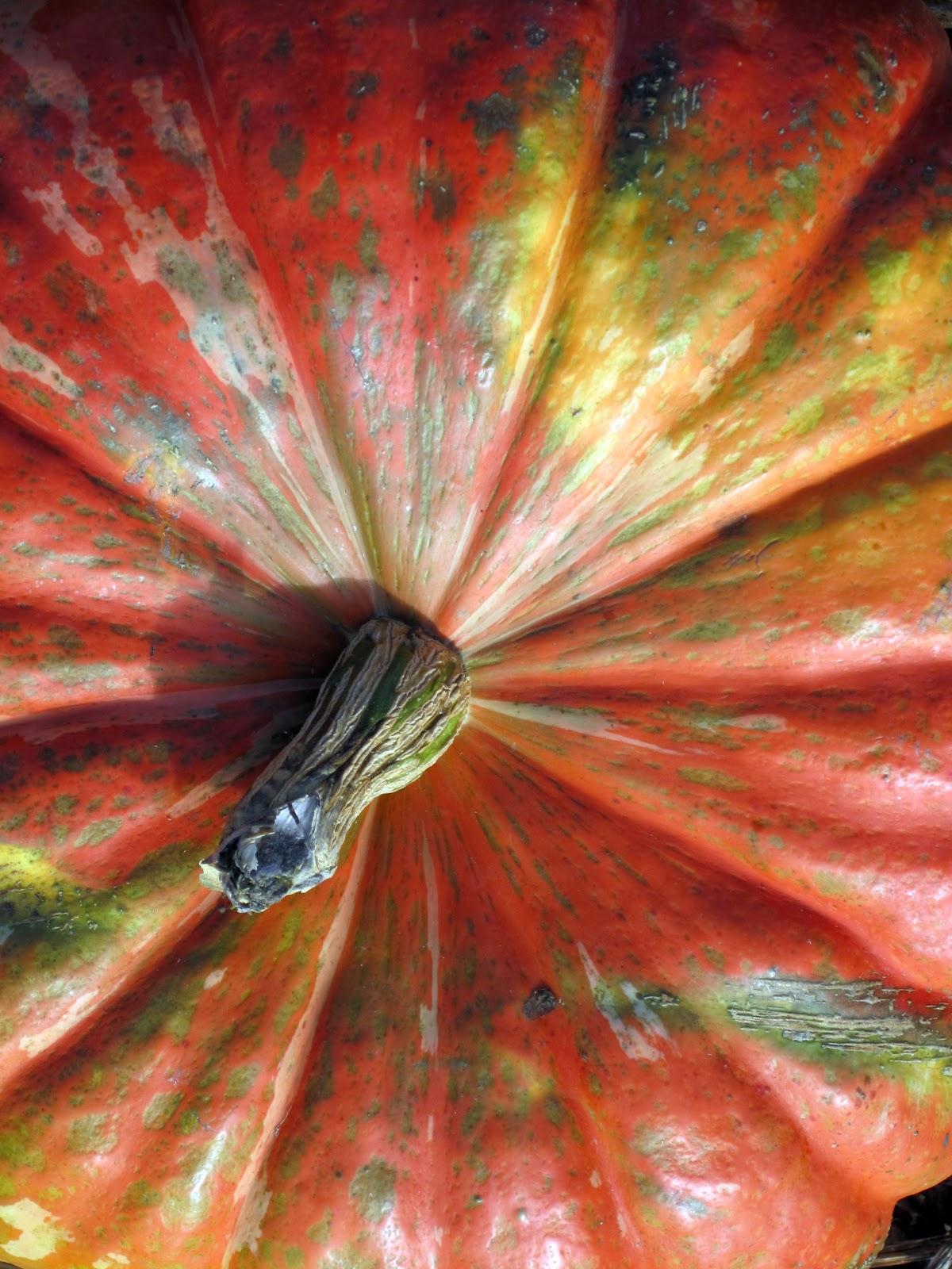 Image from http://kindbirds.blogspot.com...